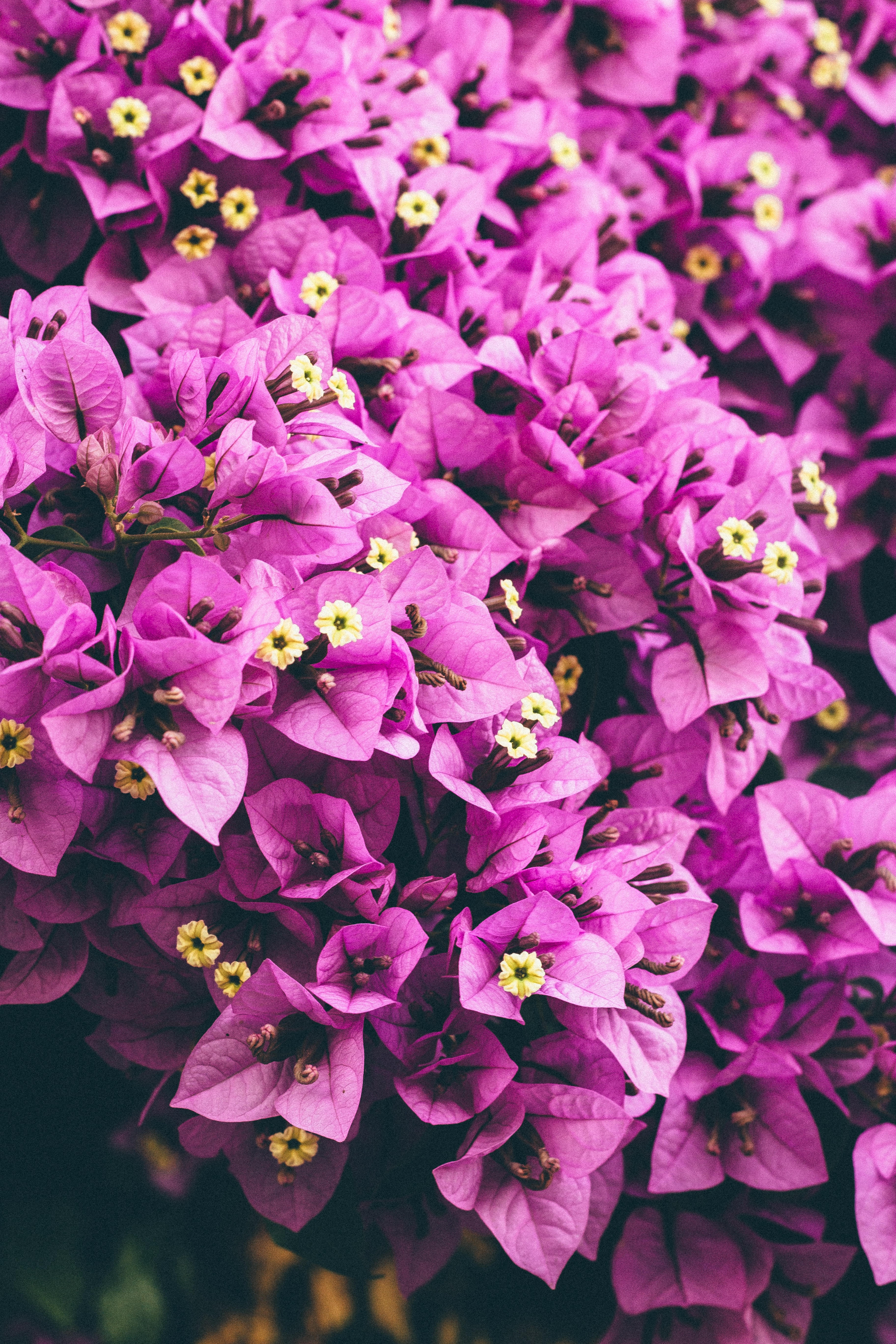 A dense grouping of purple flowers