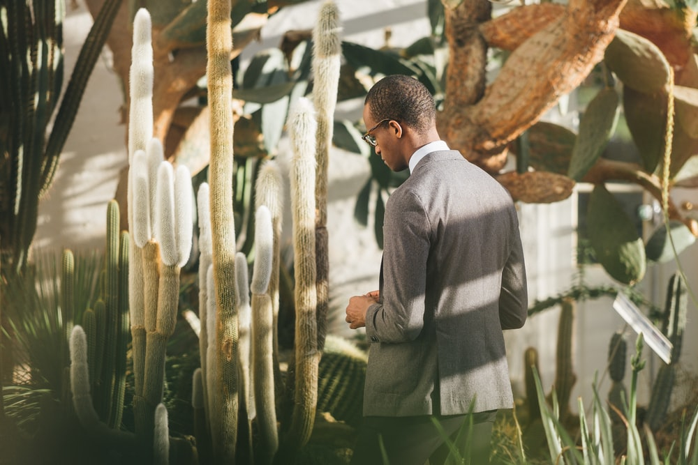 man walking beside cactus plant