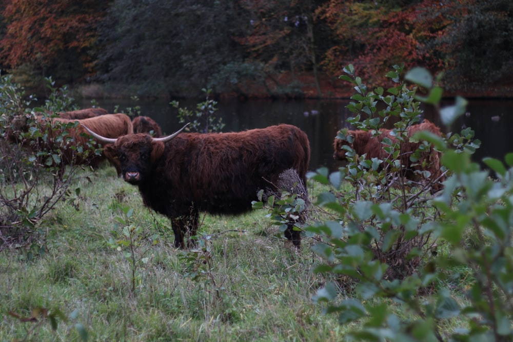 brown bison near body water during daytime