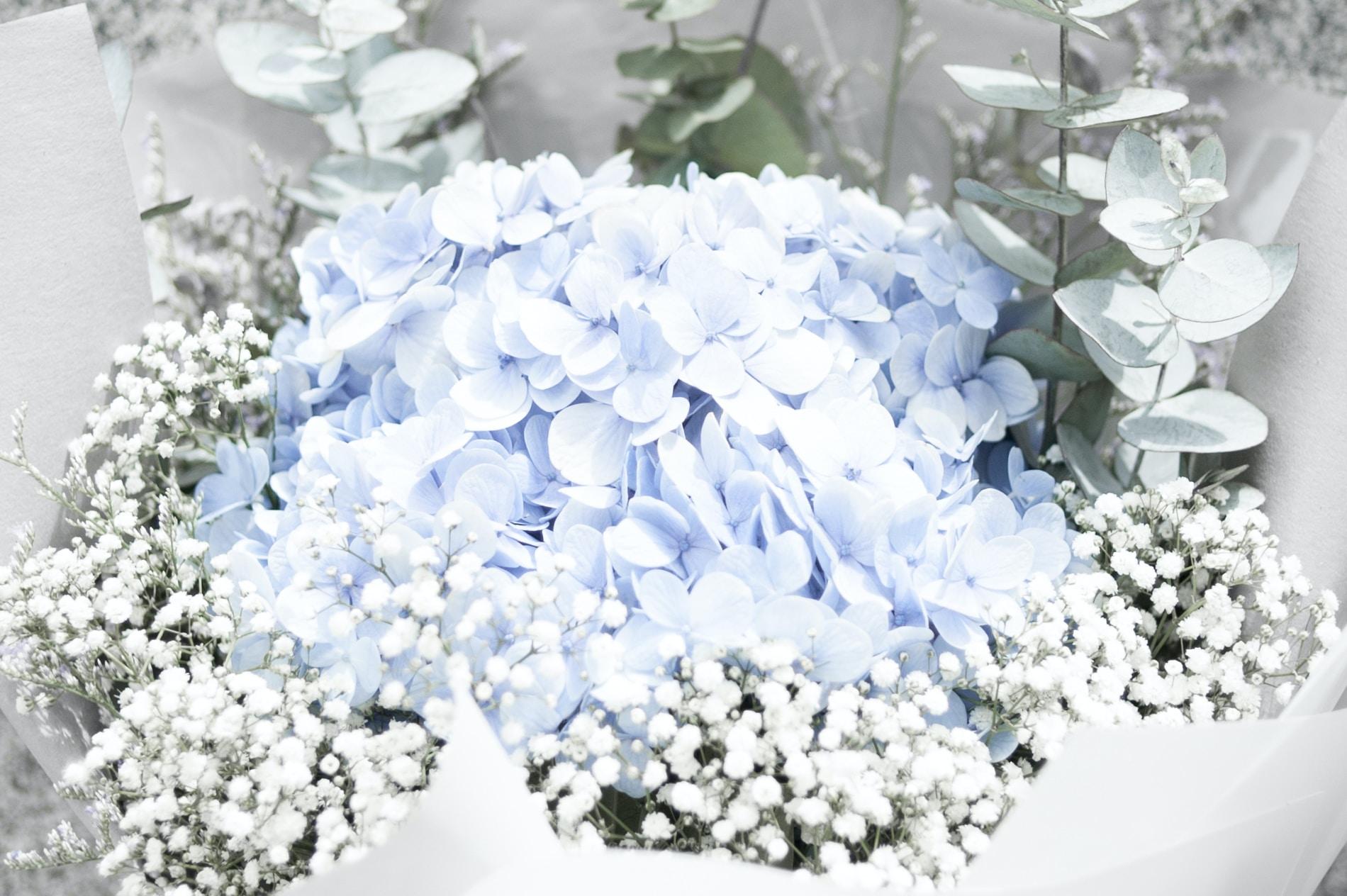 closeup photo of blue petaled flower arrangement