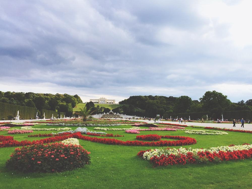 flowers on green grass field