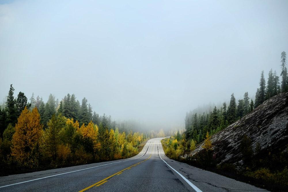 free roadway between trees