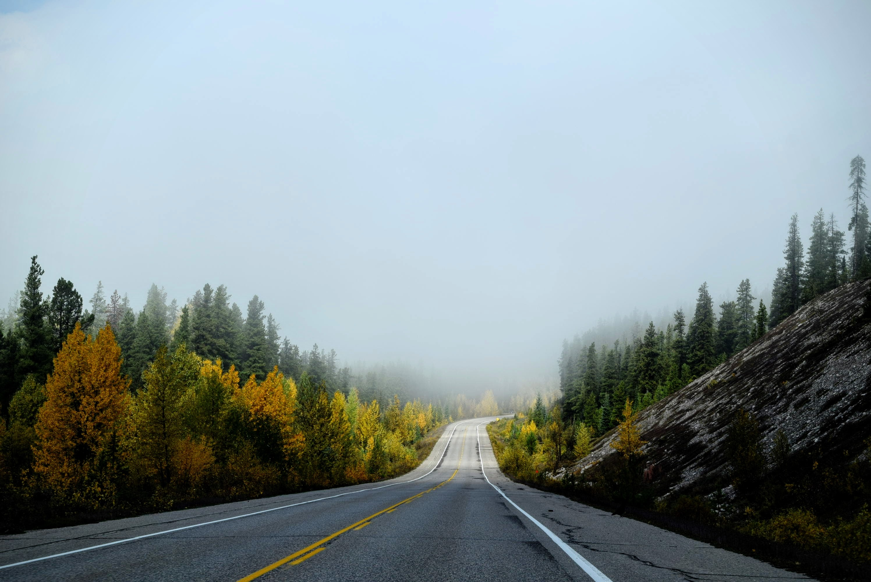 Empty road lines with fall trees in Jasper National Park