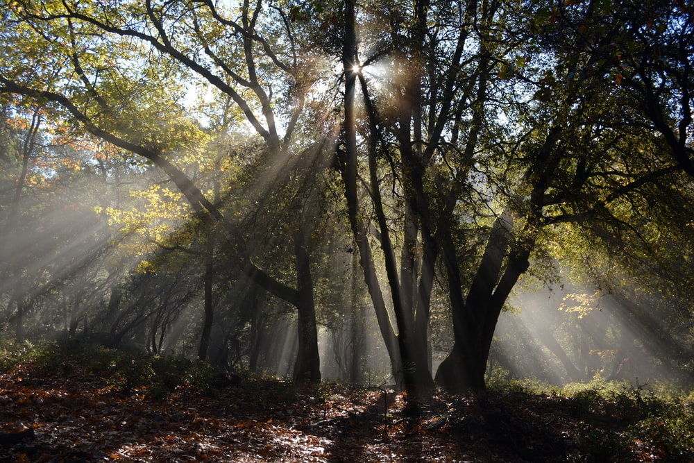 forest with yellow sunlight