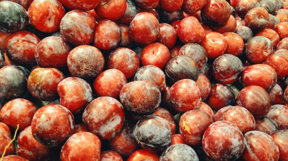 red berries photo