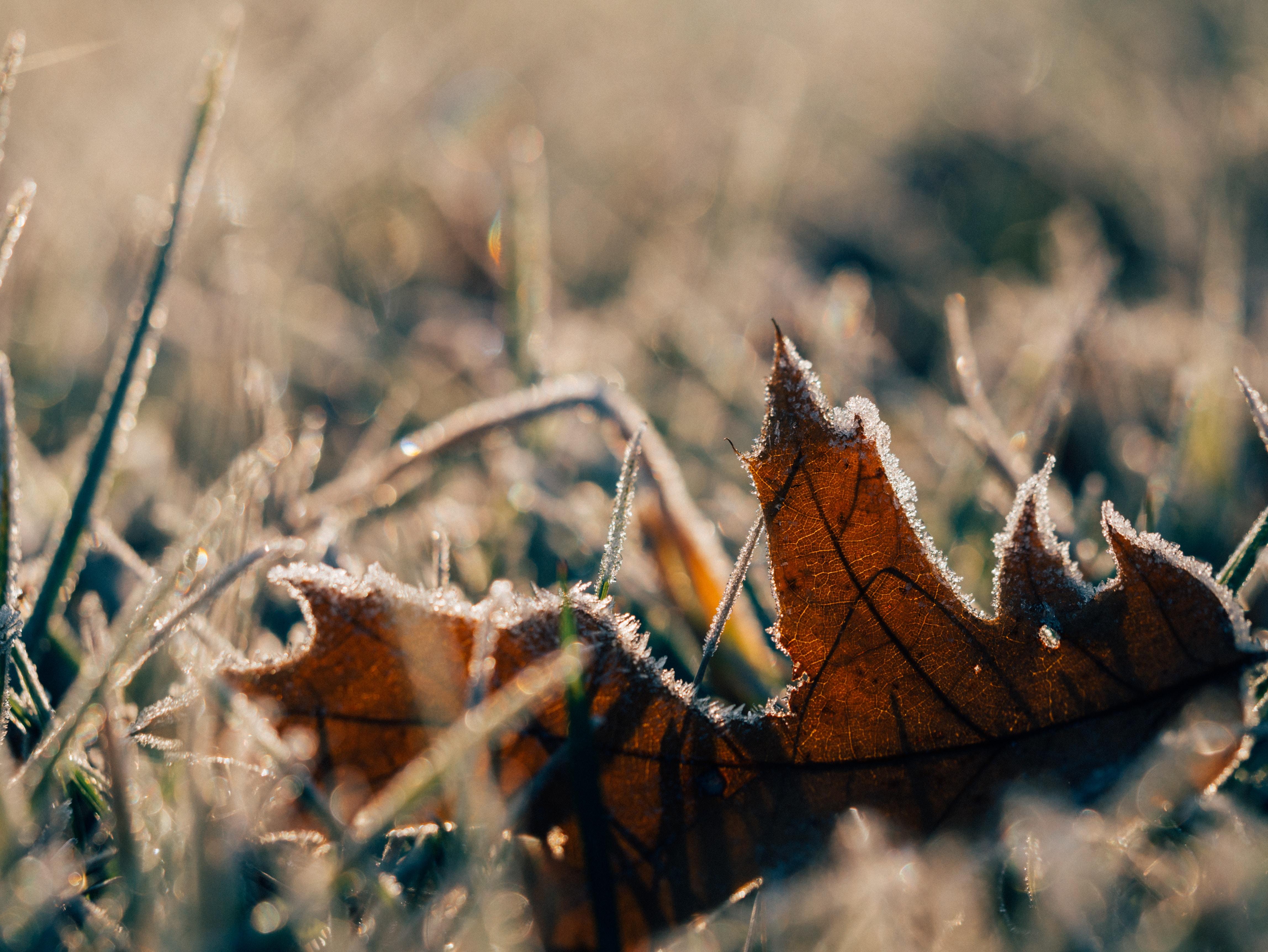 brown maple leaf on ground