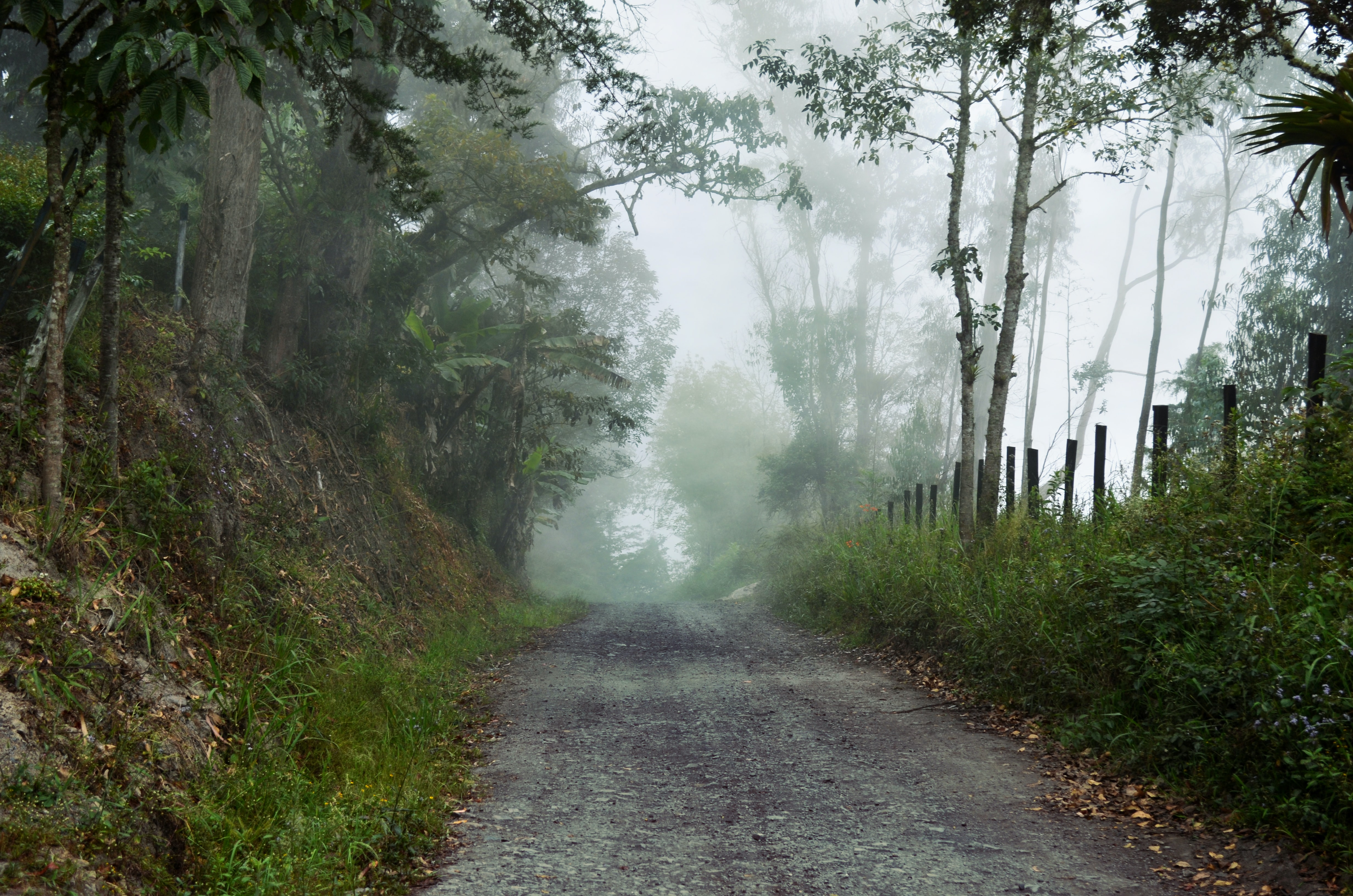 A dirt road in Boyacá lined with trees and grasses