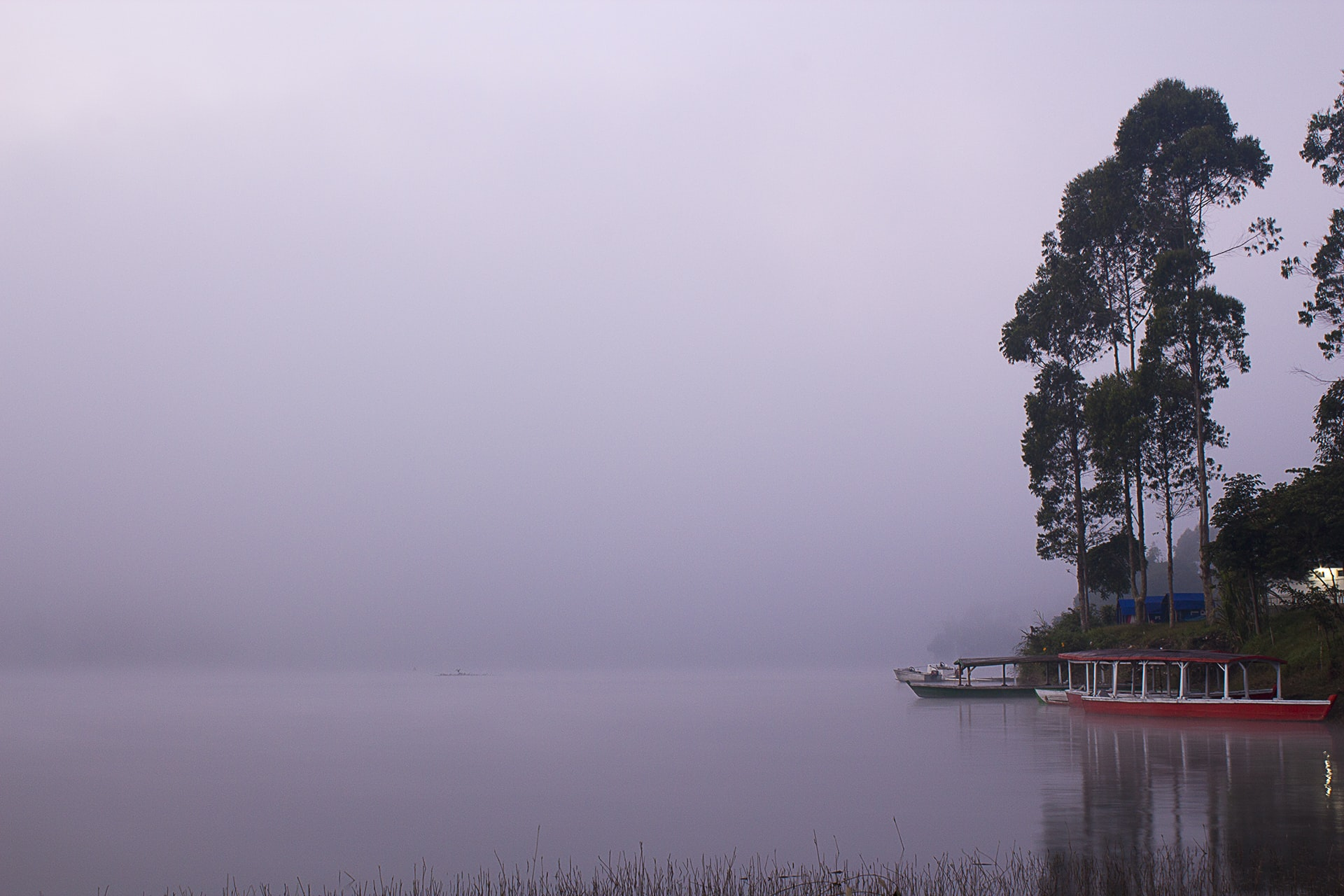 Boats docked on a woodsy shore on a misty lake