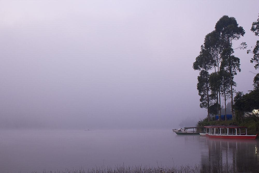 body of water covered with fog