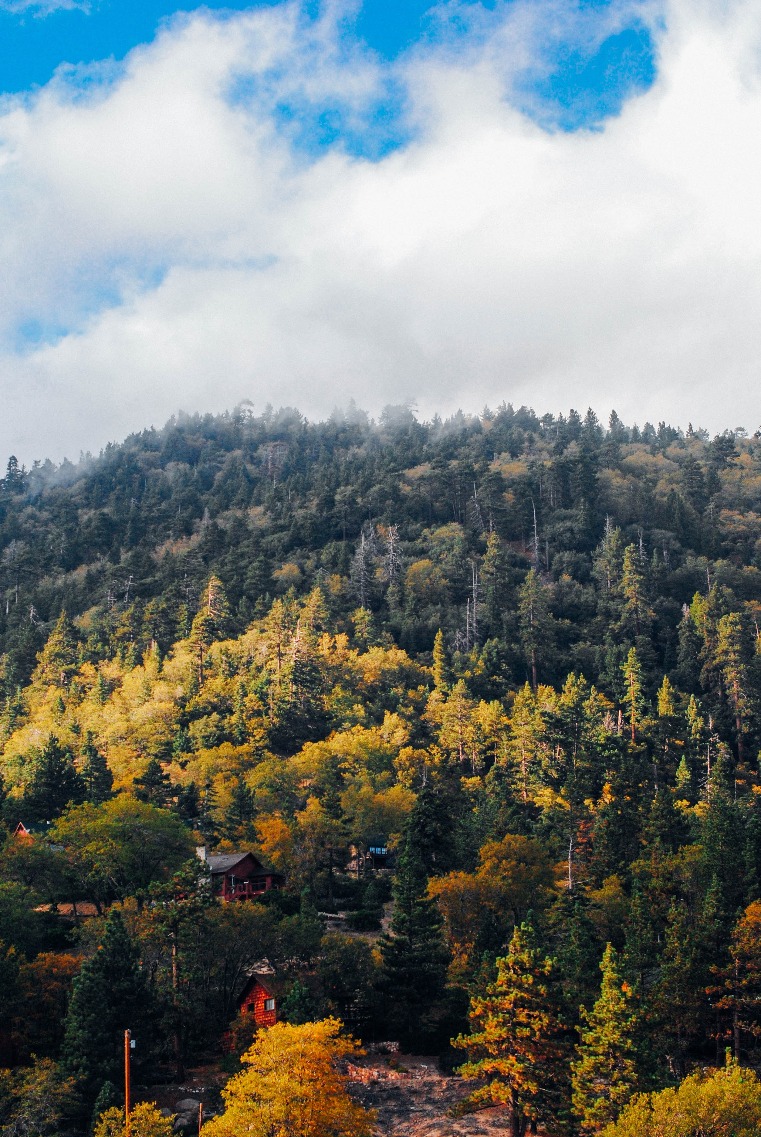 Chalets on a forested slope near Big Bear Lake in the autumn