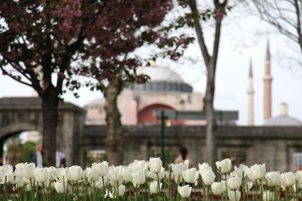 Emirgan National park, Tulip festival, Turkey