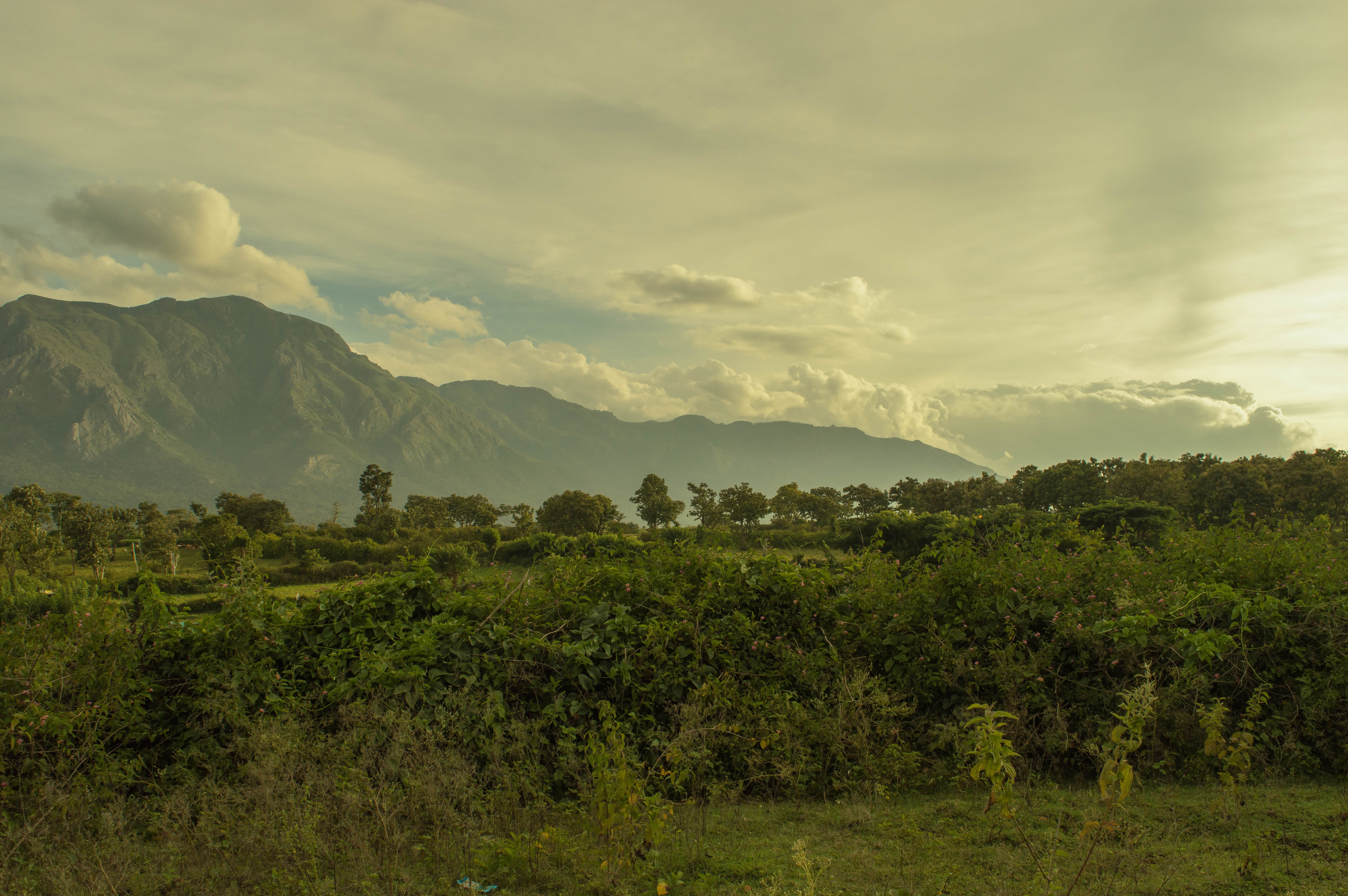 A verdant tropical forest with tall mountains on the horizon
