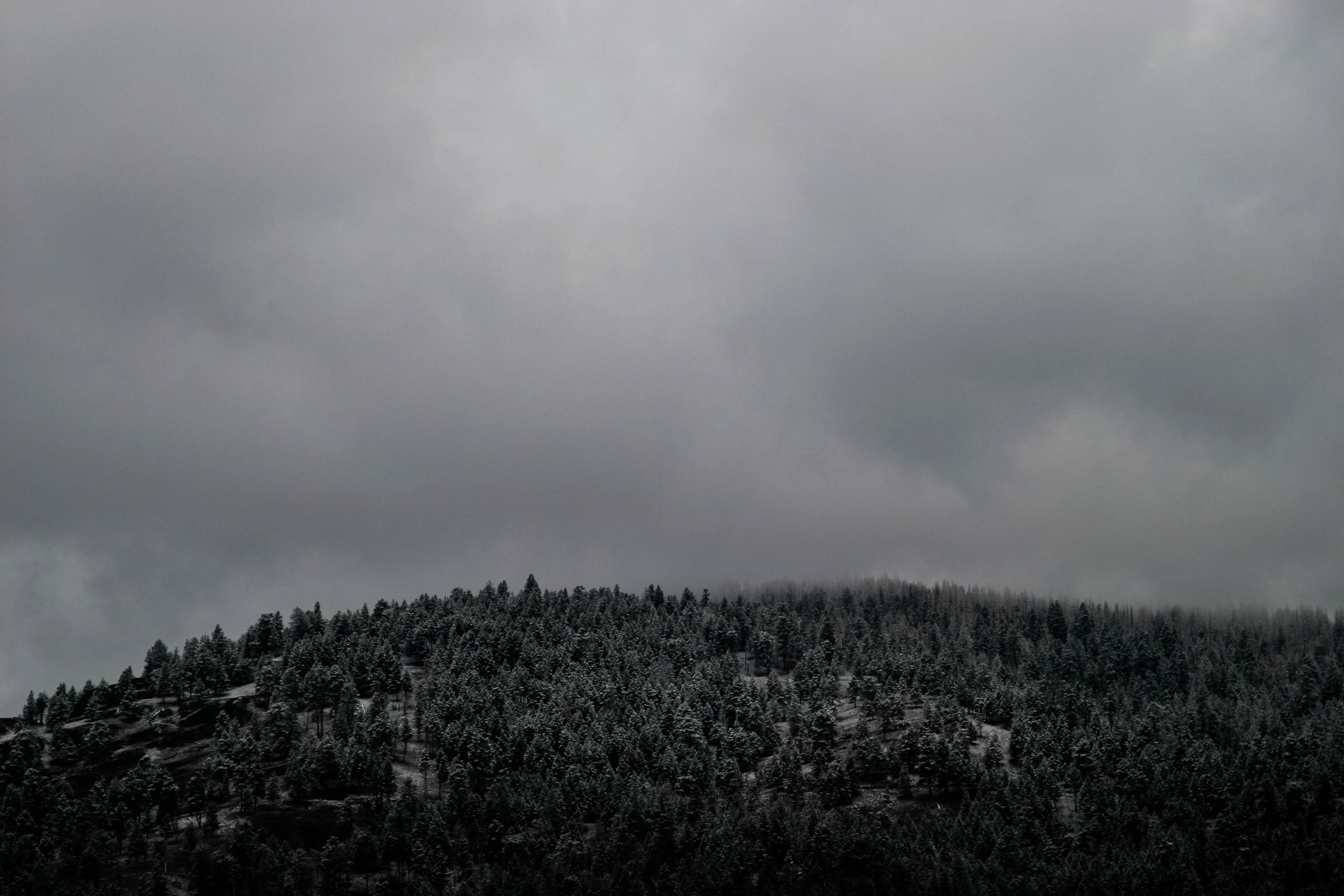 A desaturated shot of a forest on a hill under heavy clouds