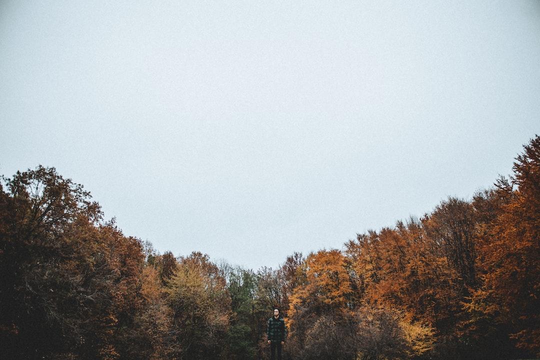 Man near orange trees