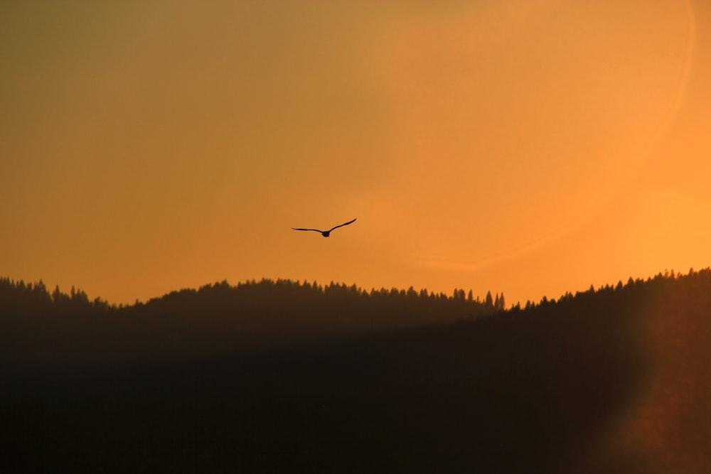 silhouette of bird flying on sky during golden hour