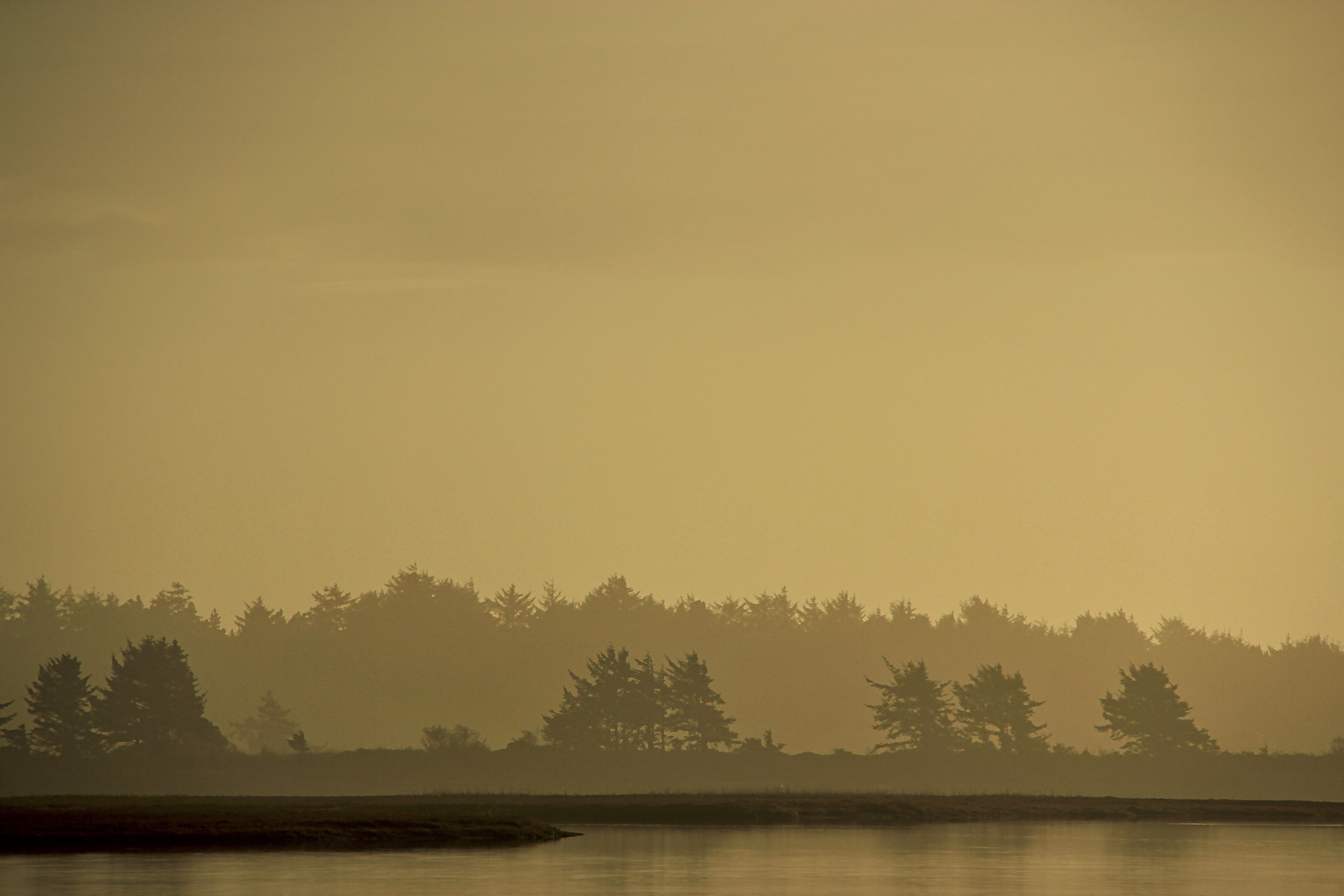 silhouette photography of trees near the body of water