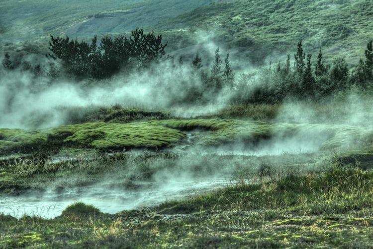Fog Devouring A Forest Photo By Frances Gunn (@francesgunn