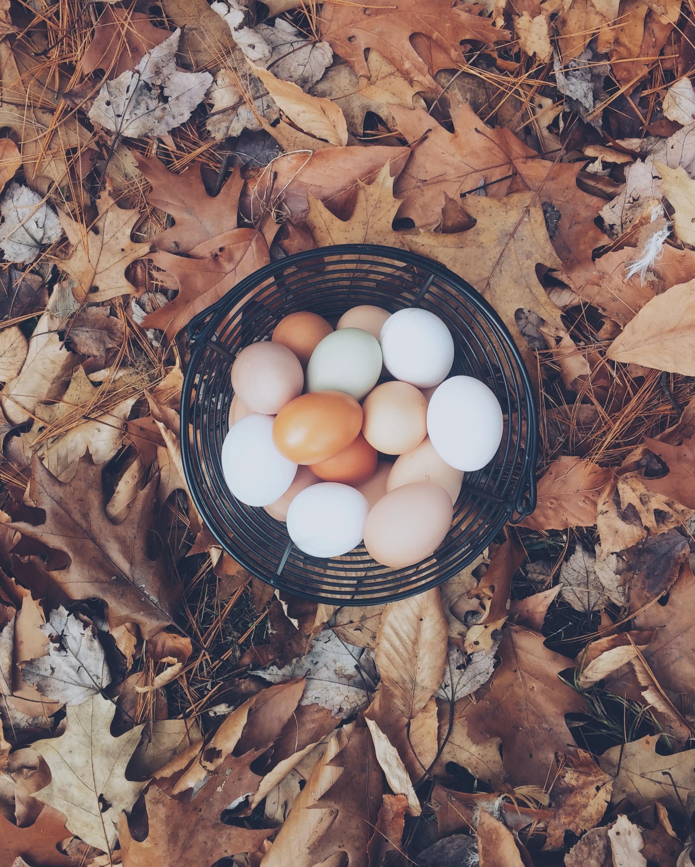 Basket of fresh chicken eggs atop fallen autumn leaves