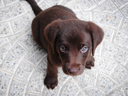 900 Puppies Images Download Hd Pictures Photos On Unsplash