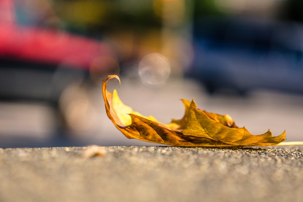 brown leaf on concrete pavement
