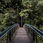 blue and brown steel bridge