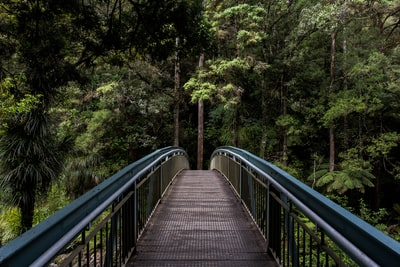 Whangarei Falls footbridge