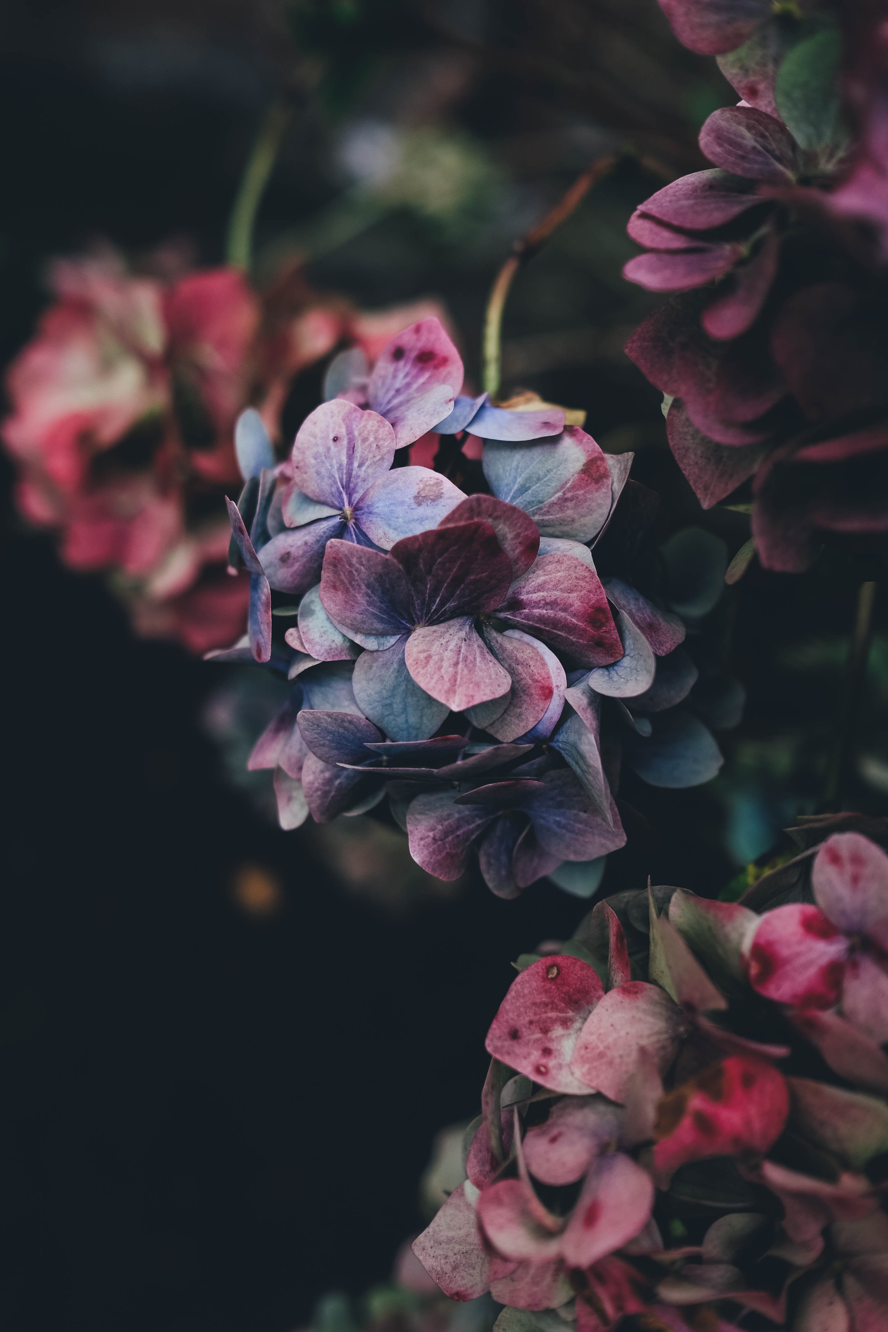 selective photography of purple petaled flowers