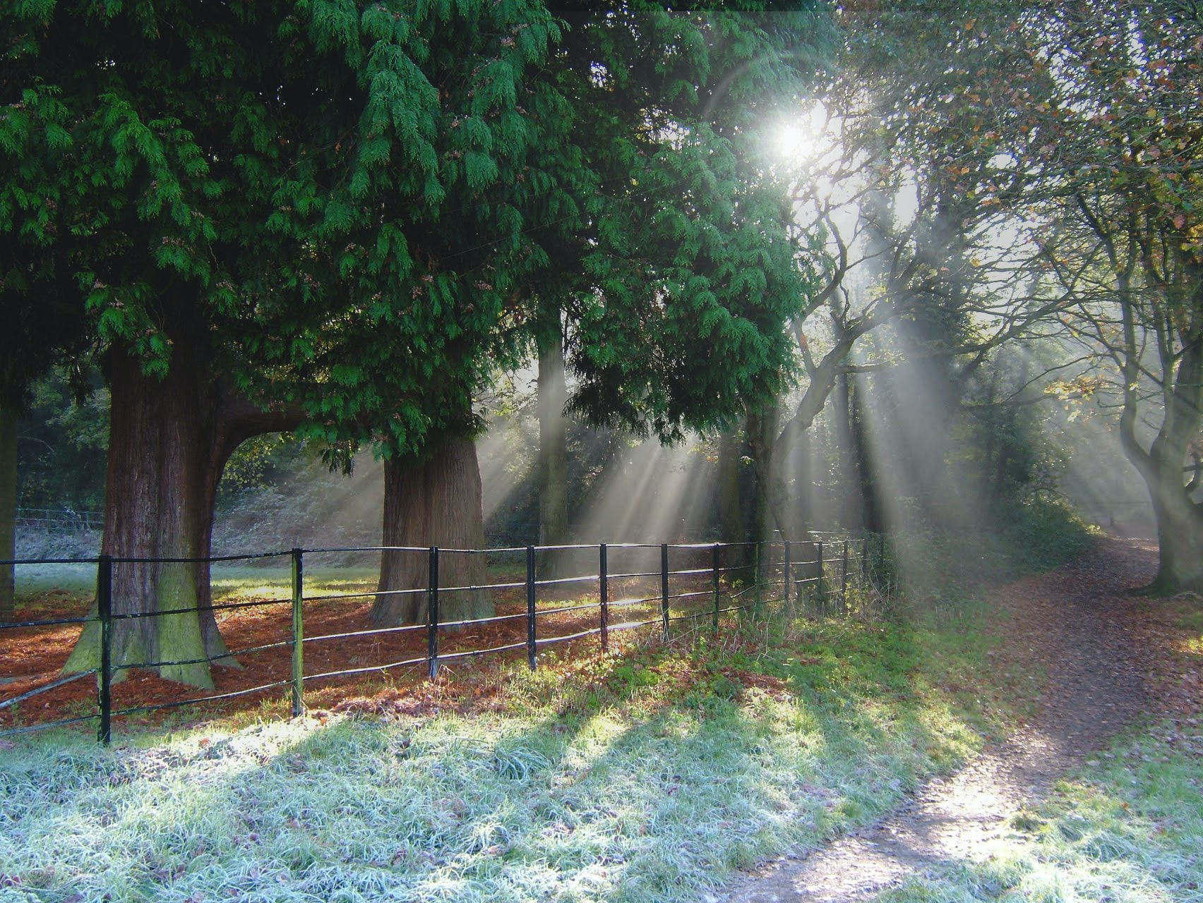 Sunrays falling on a footpath near a fence running along green trees