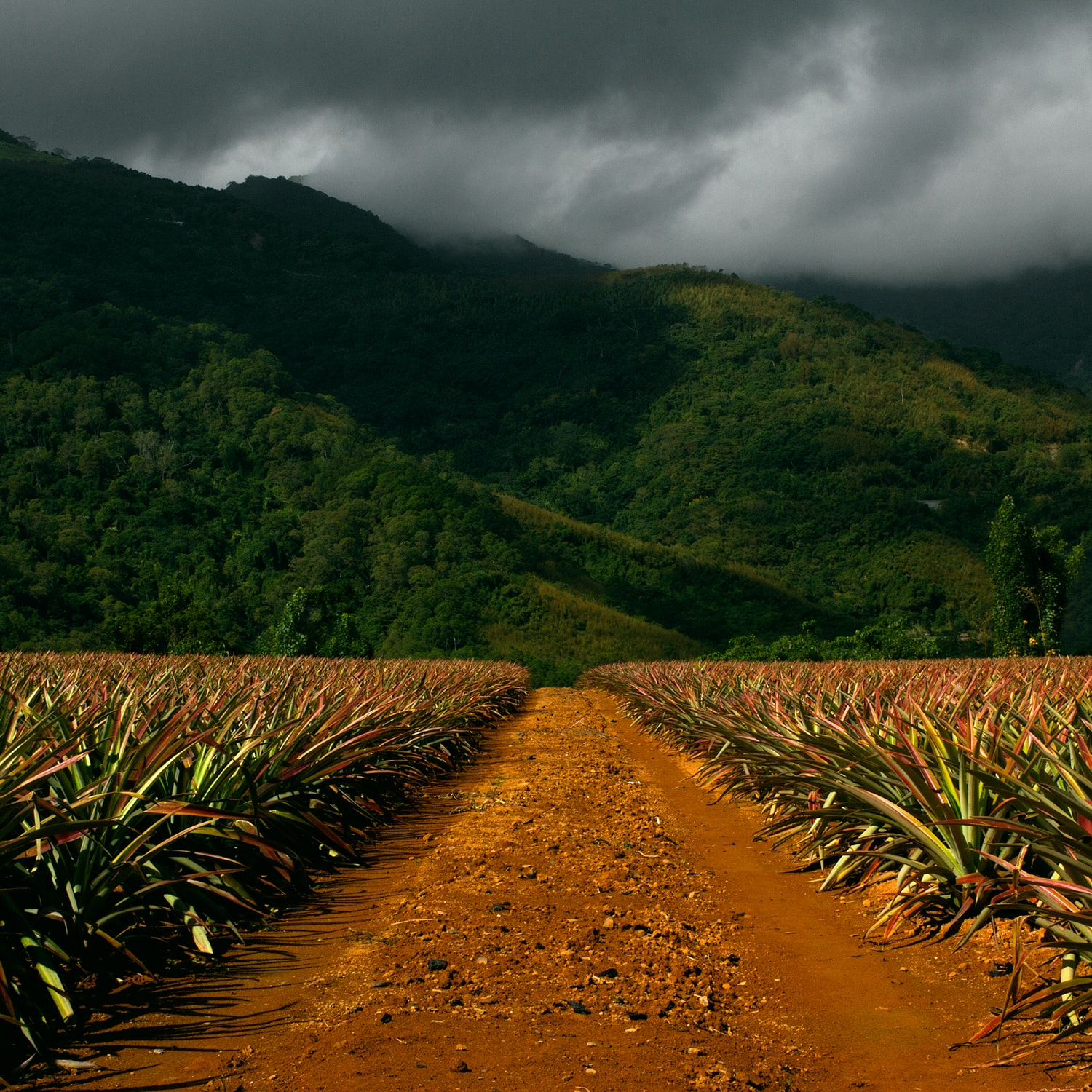 A red dirt road leading towards green hills in Taiwan