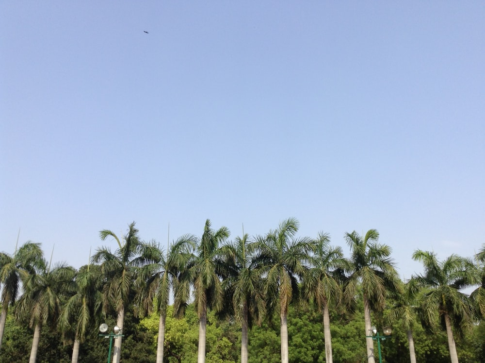 formation of palm trees
