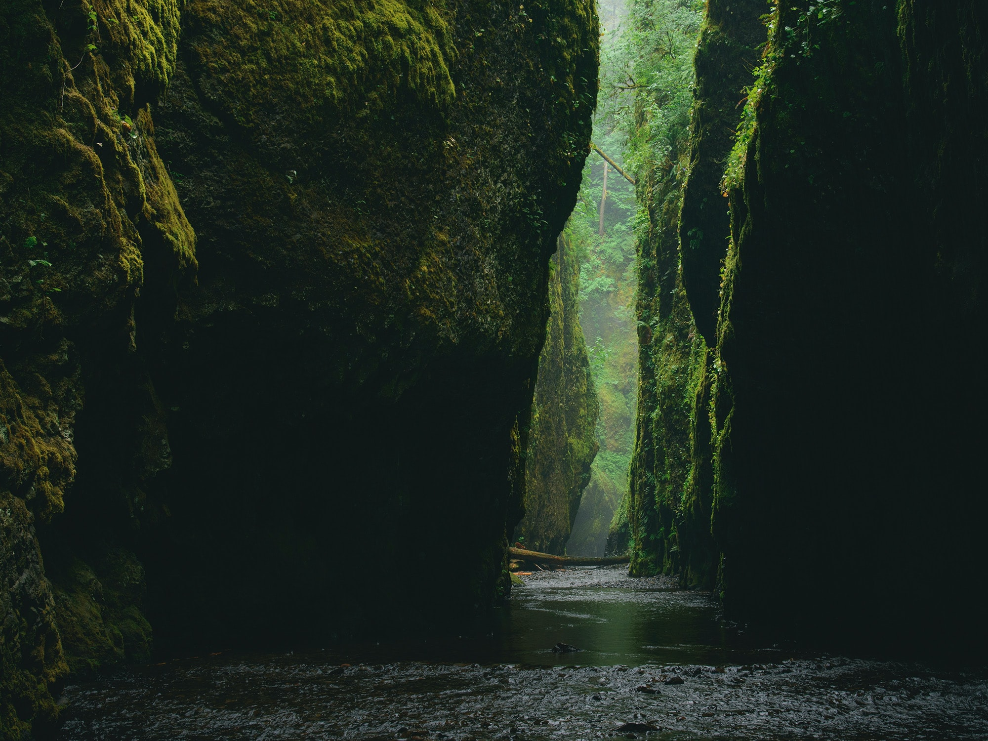 A river in a gorge with moss on its walls in Oregon