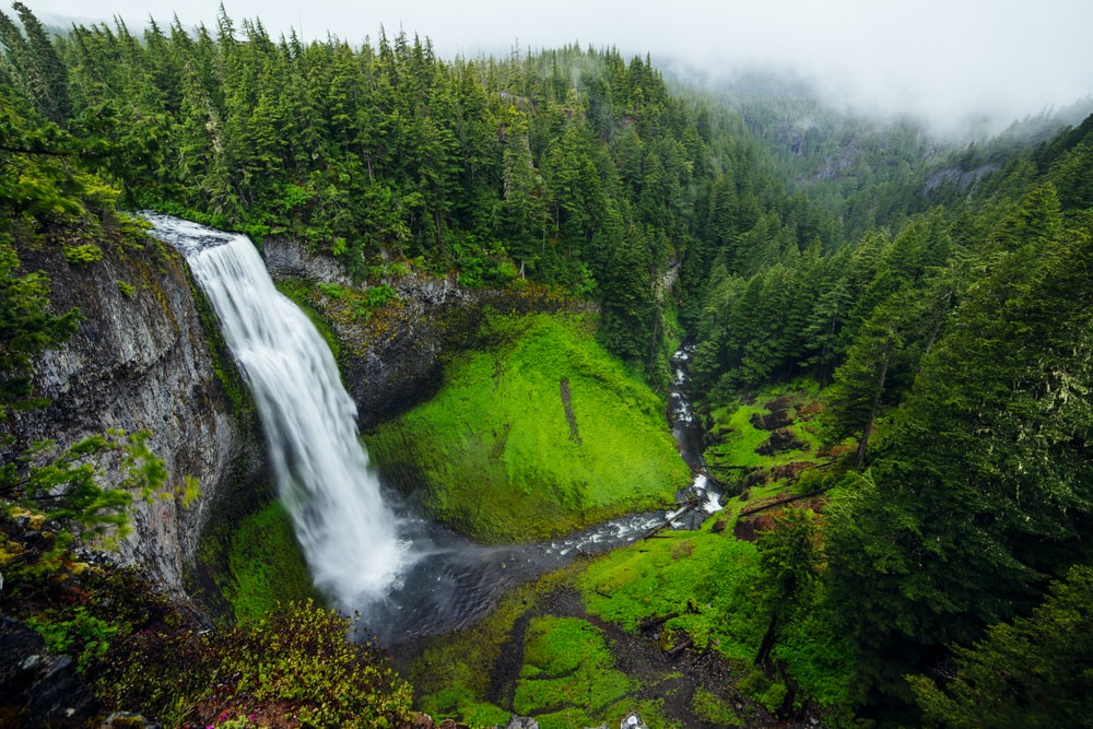 bird's-eye view photography of green forest