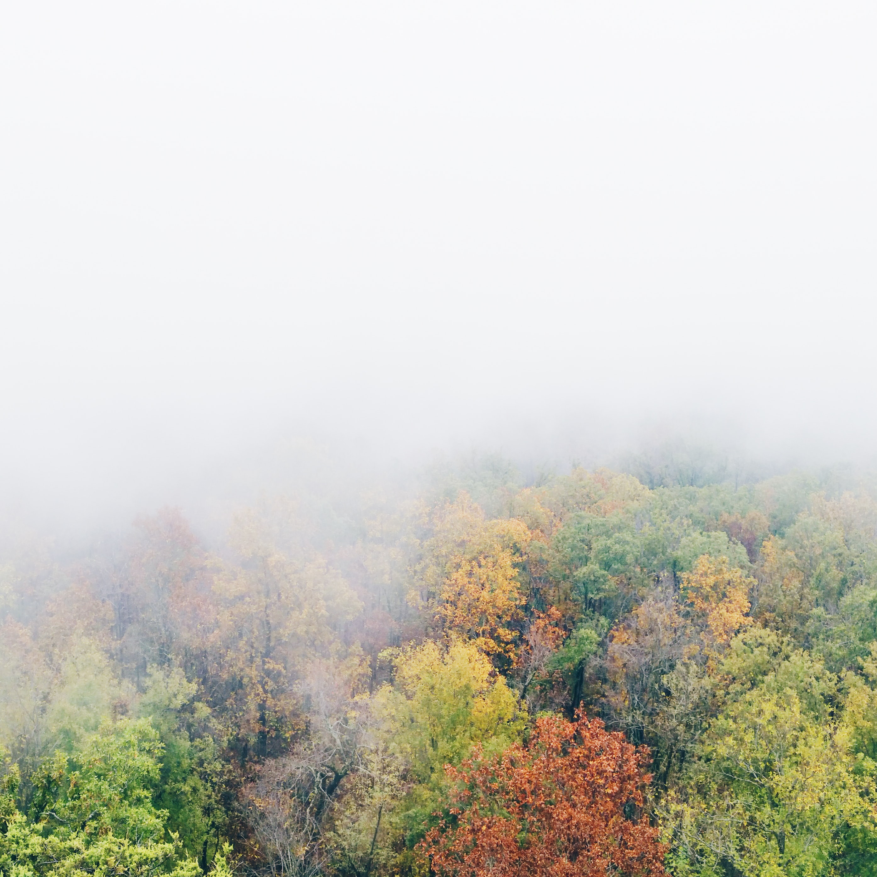 A foggy shot of trees in autumn with green, yellow, orange, and red leaves