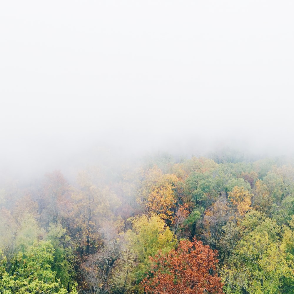 aerial view of trees covered with fog