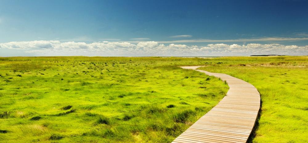 empty pathway between grass field