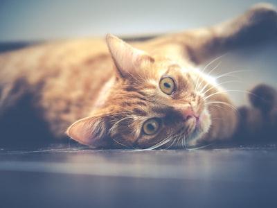 Cat photo by Dariusz Sankowski on unsplash.com