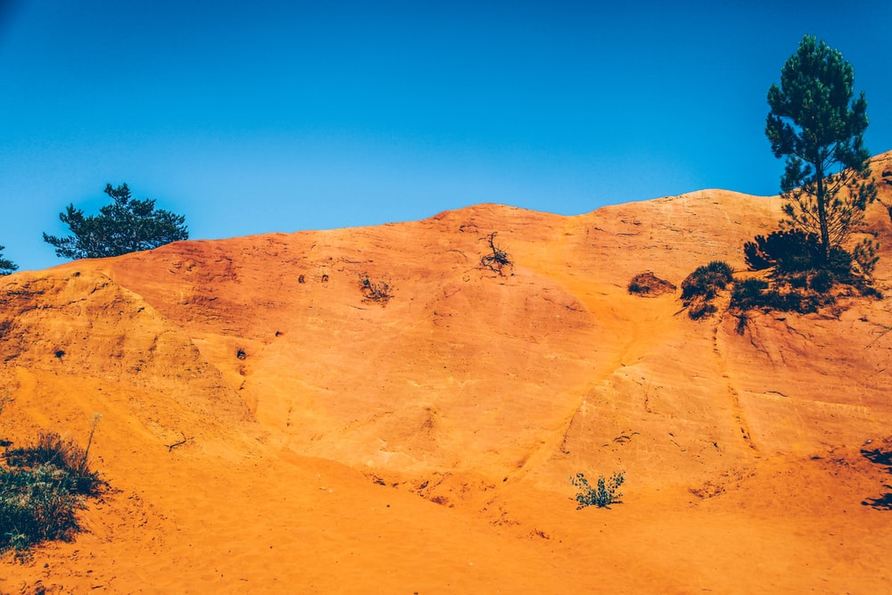 desert with few trees