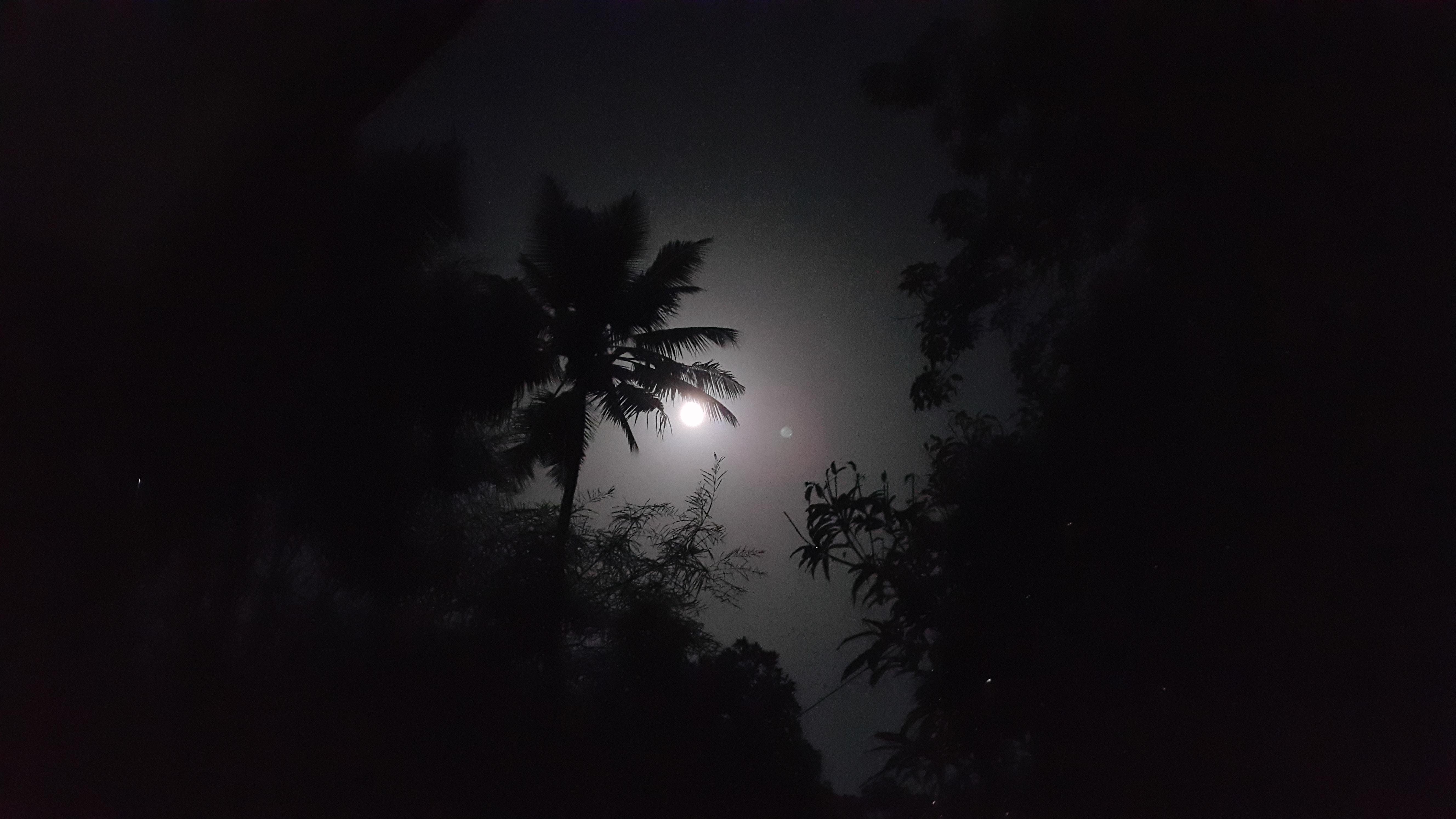 Free Unsplash photo from Sruthi  Annie
