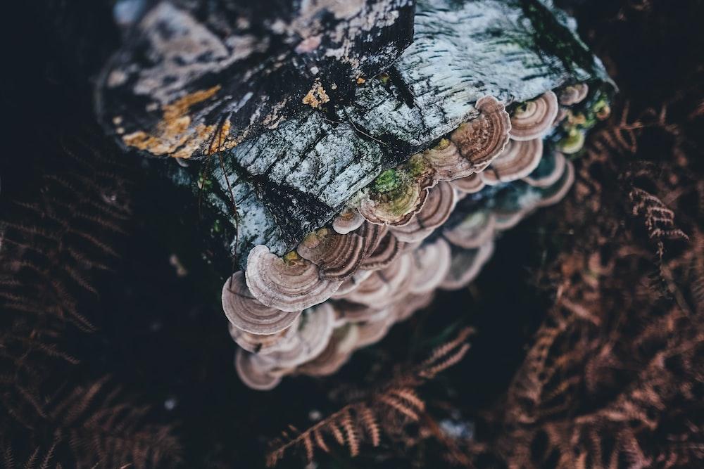 bracket mushroom on tree log