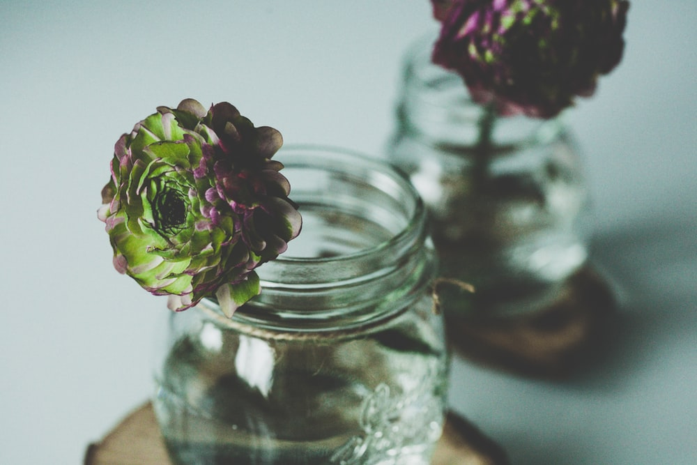 selective focus photography of two green-and-purple flowers in glass jars