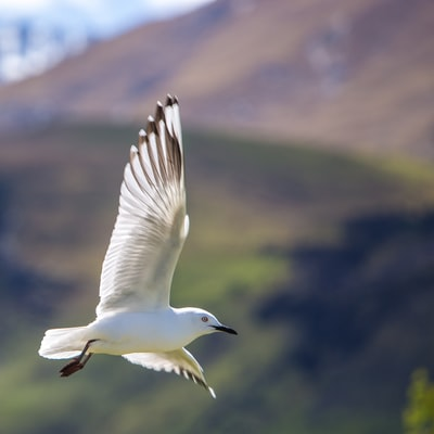 shallow focus photography of white bird flying in the sky