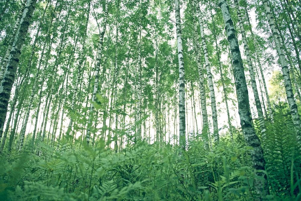 green ferns below trees during daytime