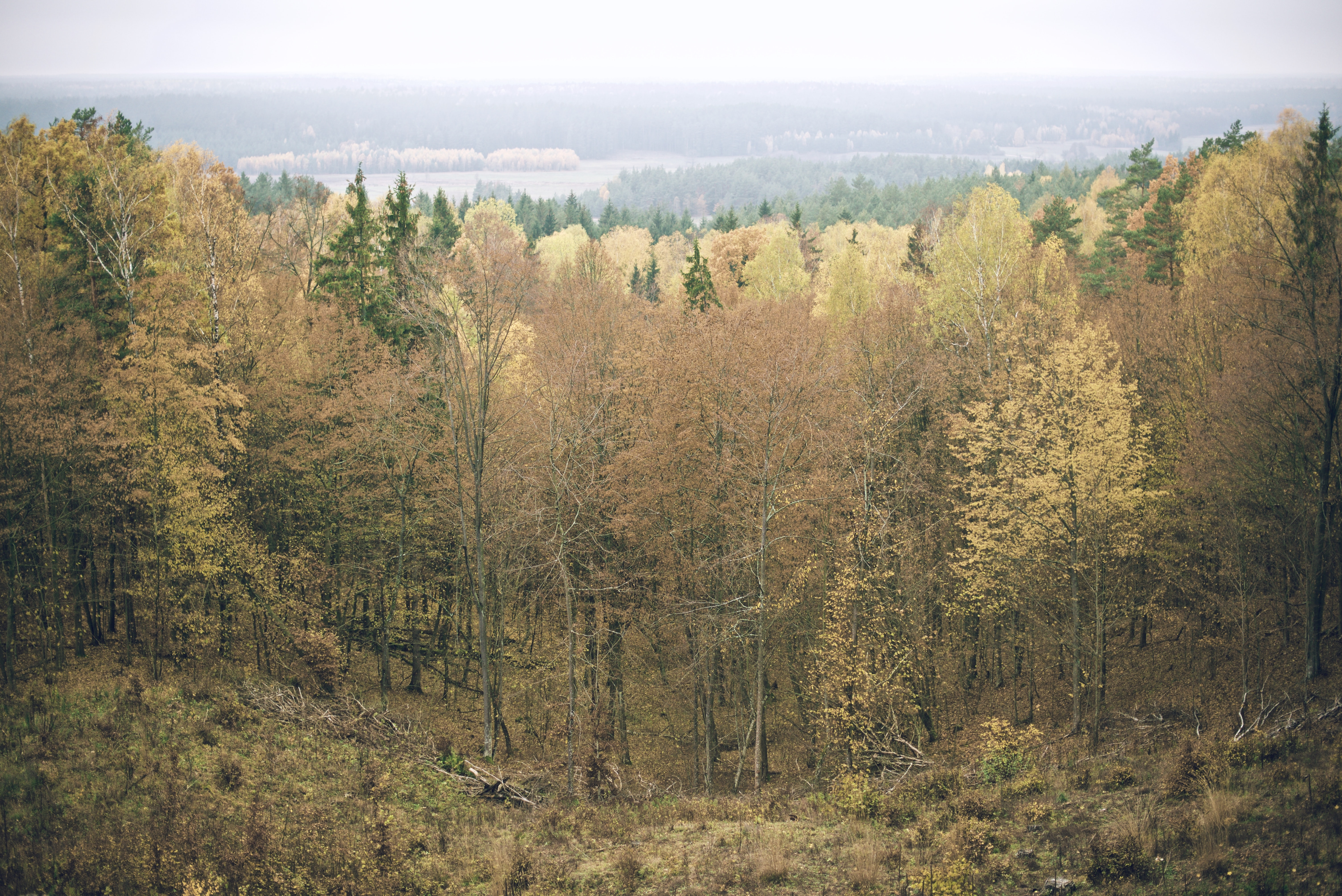 A massive forest made up of tall green trees.