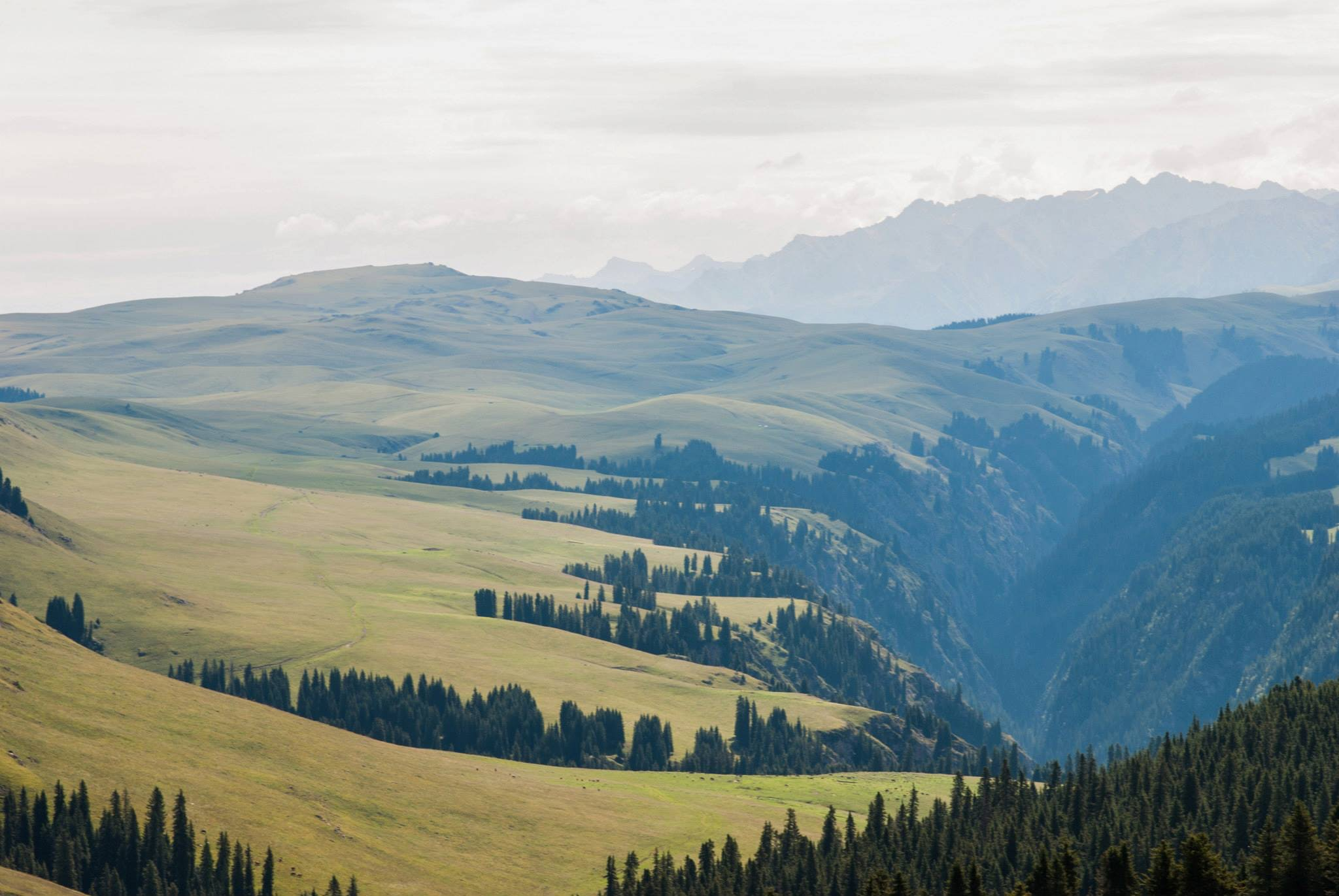 Grassy hills and a wooded valley in Mongolia