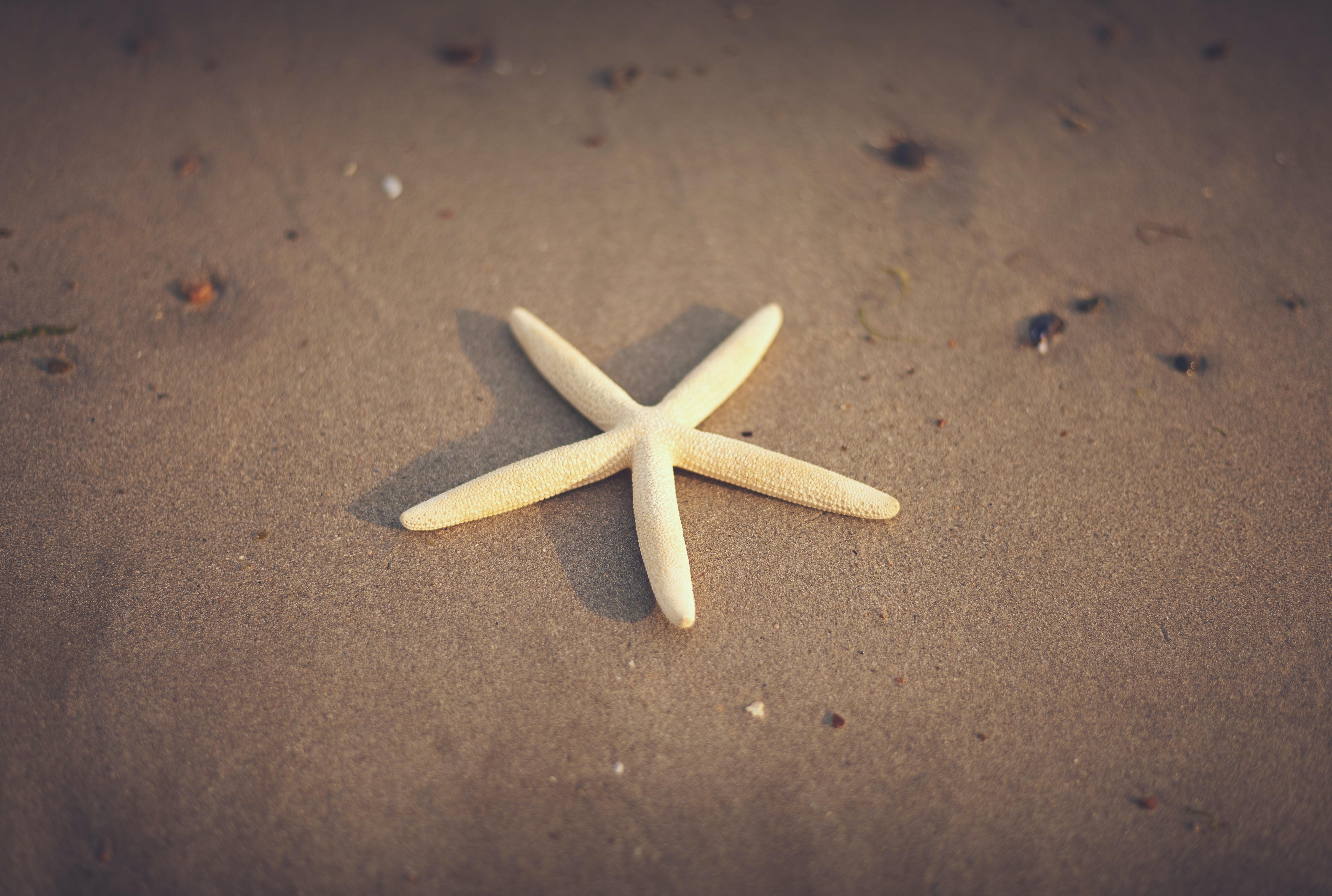 Light yellow starfish on the sand beach in Ireland