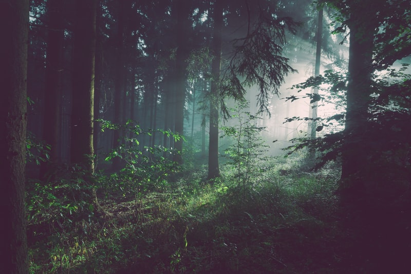 Schöner Wald mit Bäumen