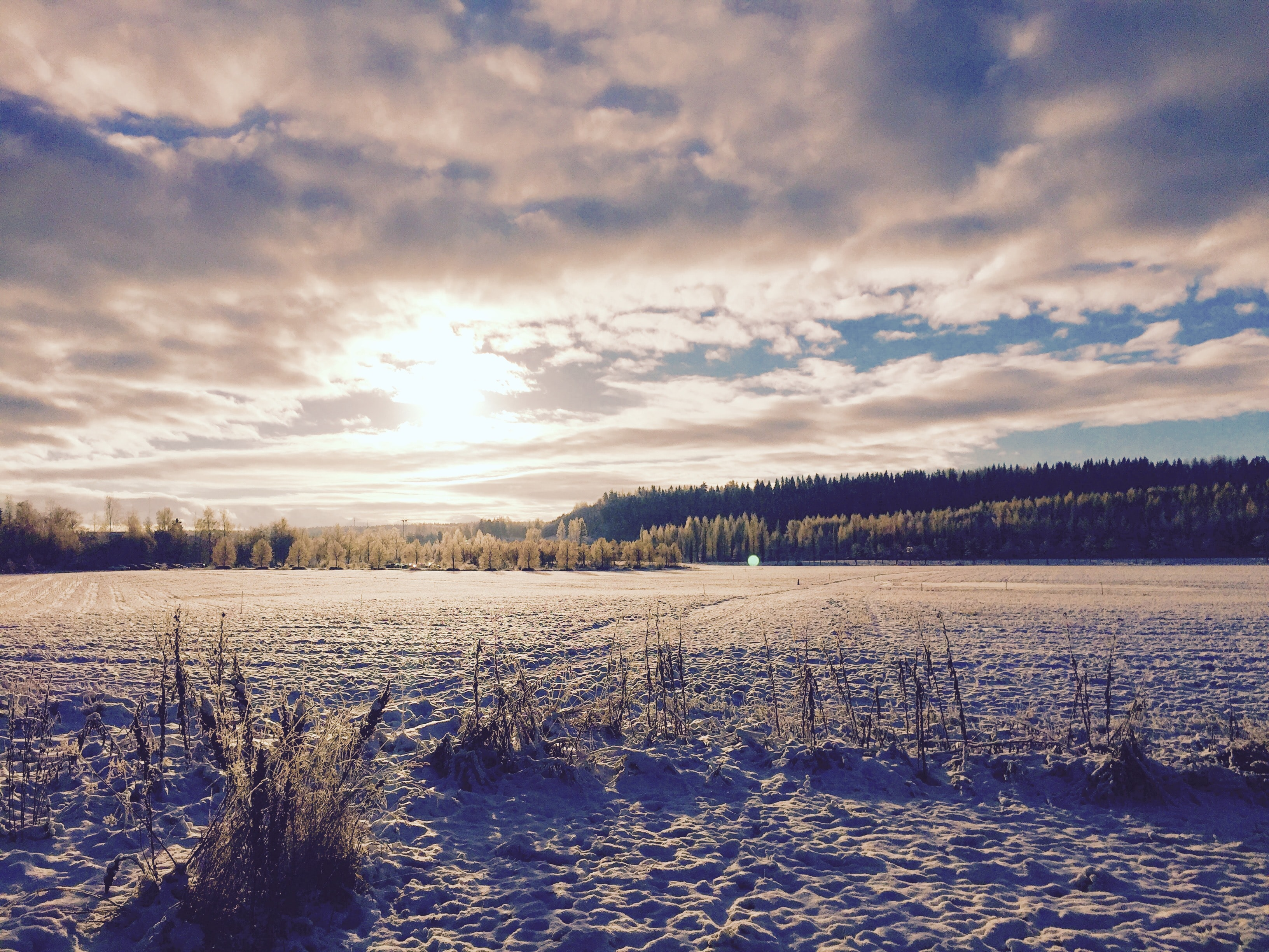 Snow covers the grass of a forest and clouds fill the sky during sunrise