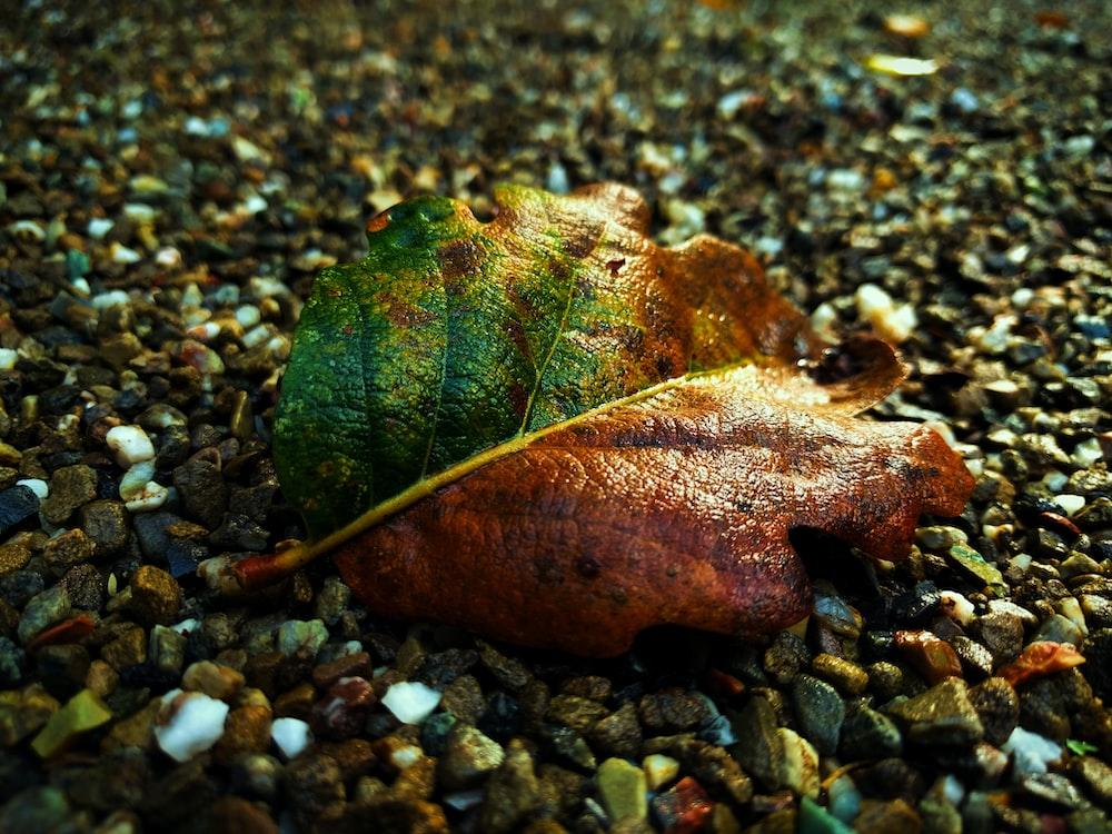 closeup photo of brown leaf
