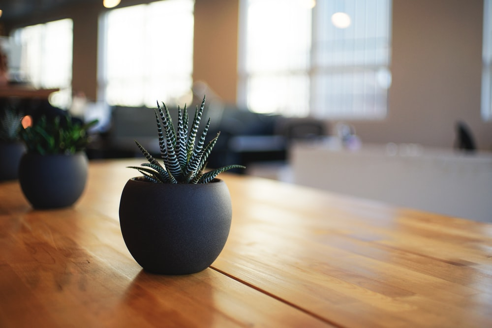 selective focus photography of snake plant in vase
