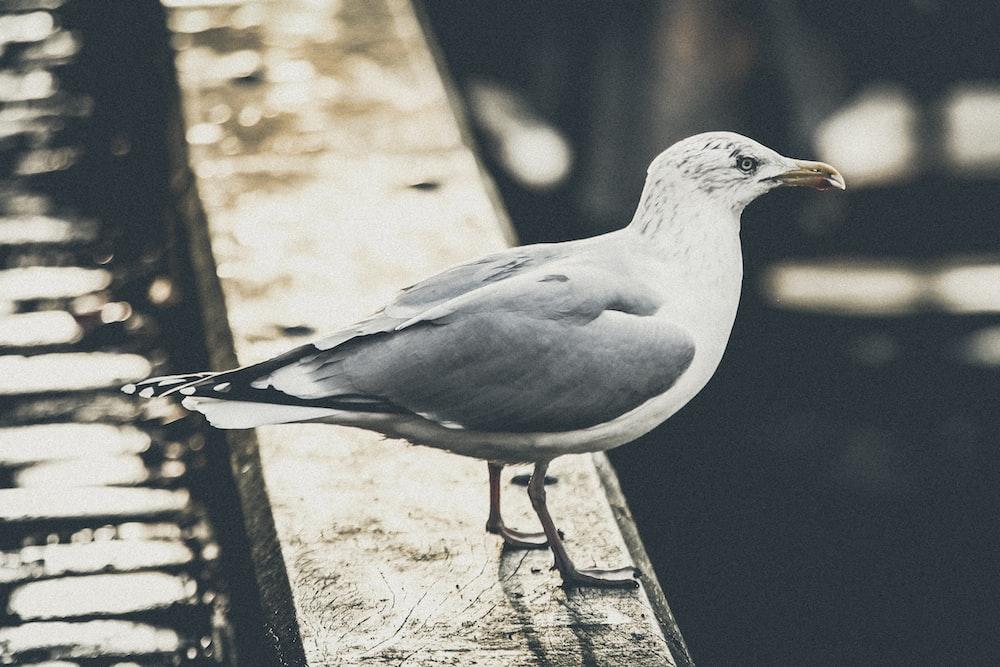 white and gray bird on pavement